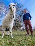 Dr. Florian Schmidt vom Institut für Angeborene Immunität der Universität Bonn mit einem Lama. © Foto: Volker Lannert/Uni Bonn